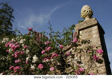 Roses_climbing _wall_mg_8739