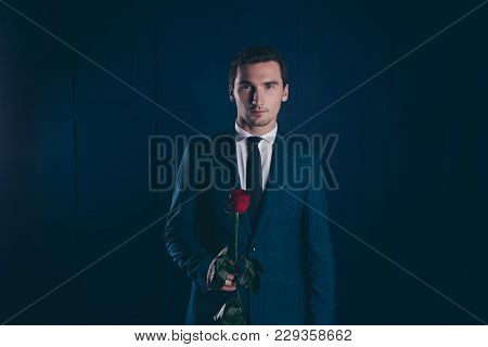 Portrait Of Ideal, Attractive, Stunning Man With Bristle, Checkered Jacket Holding  Red Rose, Prepar