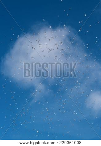 Birds Fly In The Blue Sky. Fly Concept. Dream. Life Style. Birds Leyat Against A White Cloud.
