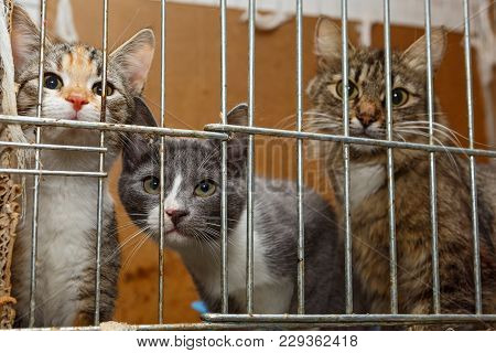 Three Kittens In A Cage Shelter For Homeless Animals