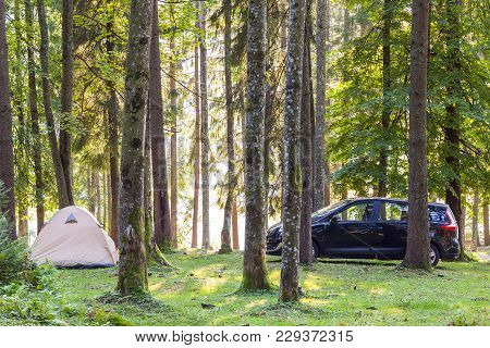 Camping Tent And A Car In Green Forest In Spring Sunny Morning With Fog Haze Among Trees. Recreation