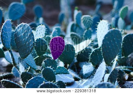 Cactus With A Petal Isolated In Violet Color On The Background Of Other Green Petals. Cactus With Gr