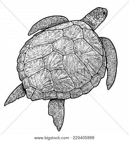 Green Sea Turtle Illustration, Drawing, Engraving, Ink, Line Art