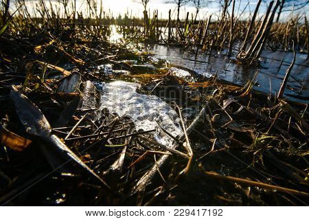 Close Up Of A Flooded Agriculture Stubble Field In The Netherlands With Backlight And Frozen Ice Ele