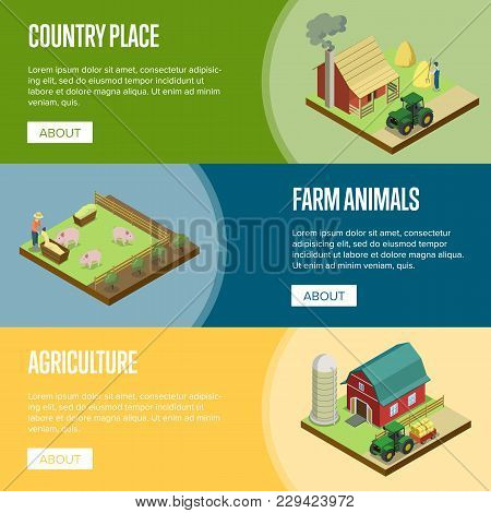 Natural Farming Isometric Horizontal Flyers. Hay Making And Pigs Breeding, Tractor Near Rural Farm B