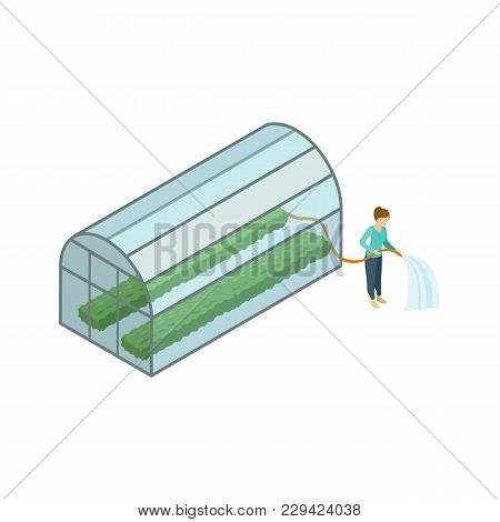 Woman Working In Greenhouse Isometric 3d Element. Natural Farming, Traditional Agribusiness Isolated