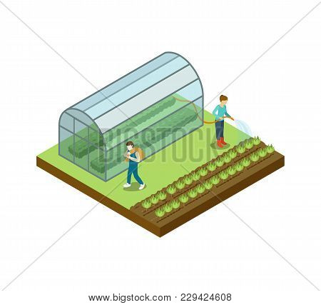 People Working In Vegetables Greenhouse Isometric 3d Element. Natural Farming, Traditional Agribusin