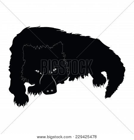 Wolf Large - Lies On Paws - Isolated On White Background -art Creative Vector