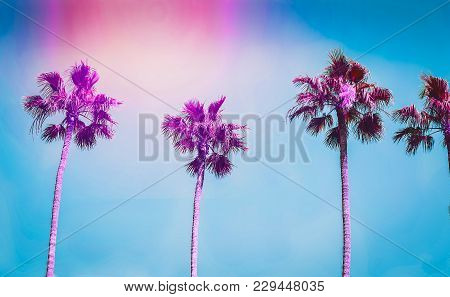 Ultra Violet Palms In The City Of Los Angeles. Toning
