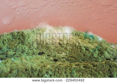 Green Mold Penicillin On Bread, An Interesting Furry Texture