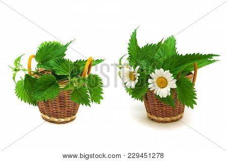 Leaves Of Nettle And Chamomile Flowers On White Background. Horizontal Photo.