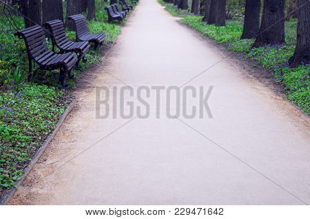 Quiet Park Alley With Wooden Benches And Spring Flowers Blooming In The Green Lawn