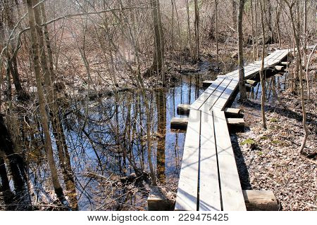 Wood Planking Built Over Swampland To Keep Hikers Feet Dry.