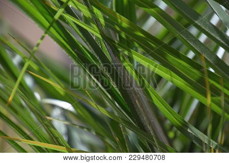 Close Up View Of A Fan Palm