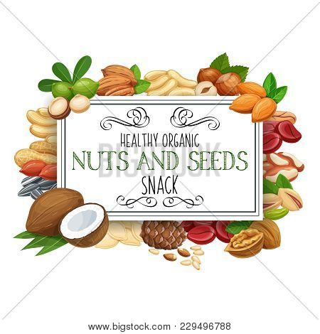 Banner Template With Nuts And Seeds. Pistachio, Cashew, Coconut, Hazelnut And Macadamia. Cola Nut, P