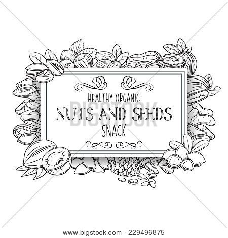 Banner Template With Hand Drawn Nuts And Seeds. Cola Nut, Pumpkin Seed, Peanut And Sunflower Seeds.