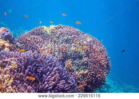 Coral Reef With Tropical Fishes. Tropical Seashore Animals Underwater Photo. Coral Reef Animal. Warm
