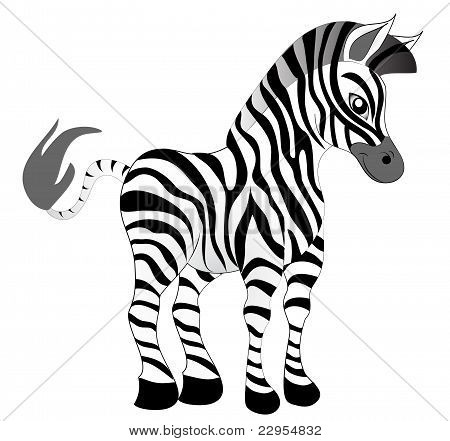 Making Look Younger Nice Zebra