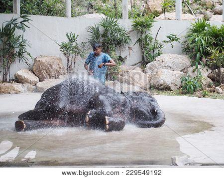 Chonburi, Thailand - December 04, 2017:thai Clever Elephant Show Diary Bathing Shower At Khao Kheow