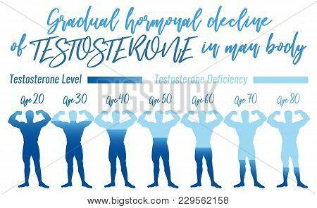 Testosterone Hormone Level. Beautiful Medical Vector Illustration In Blue Colours. Scientific, Educa