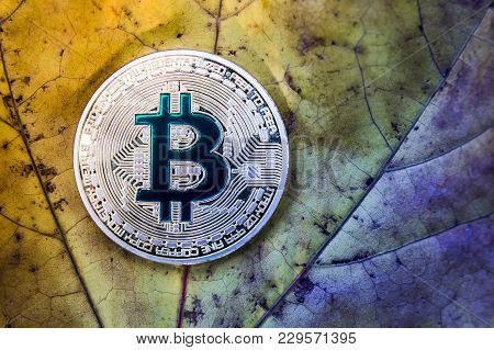 Bitcoin On A Fallen Autumn Leaf That Deteriorates, The Concept Of Falling Bitcoin Prices