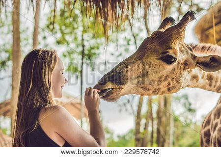 Happy Young Woman Watching And Feeding Giraffe In Zoo. Happy Young Woman Having Fun With Animals Saf