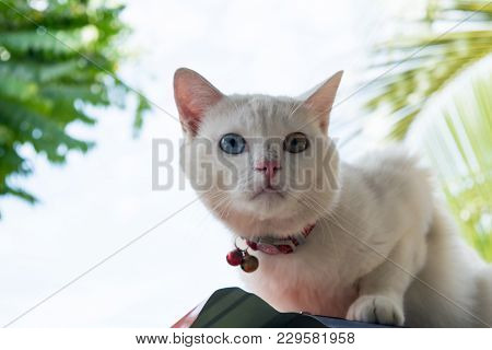 Afraid White Cat On Blue Sky Background