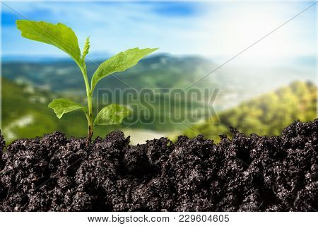 Green Plant Soil Design New Young Fresh