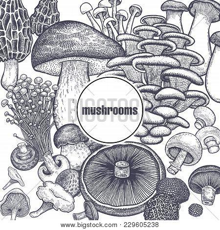 Edible Mushroom Poster. Bolete, Portobello, Shimeji, Champignon, Oyster Mushrooms, Enoki, King Trump