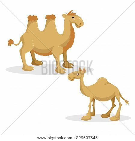 Cartoon Trendy Style Camels Set. Dromedary Camel And Bactrian. Closed Eyes And Cheerful Mascots. Vec