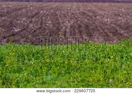 Field With Dirt Roads Green Grass And Plowed Land Landscape
