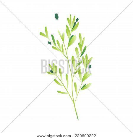 Vector Cartoon Abstract Green Plant Icon. Wild Meadow Field Grass Garden Spring Easter, Women Day Ro