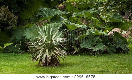 A Giant Rhubarb And An Agave In A French Garden In Normandy