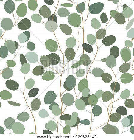 Seamless Pattern With Eucalyptus. Hand Painted Floral Ornament With Silver Dollar, Seeded And Baby E