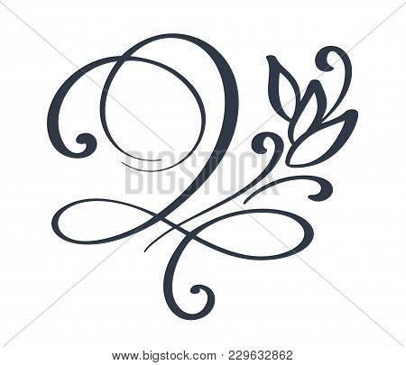 Flourish Swirl Ornate Decoration For Pointed Pen Ink Calligraphy Style. Quill Pen Flourishes. For Ca