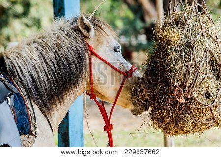 Horses In The Paddock Eating Dry Hay Summertime