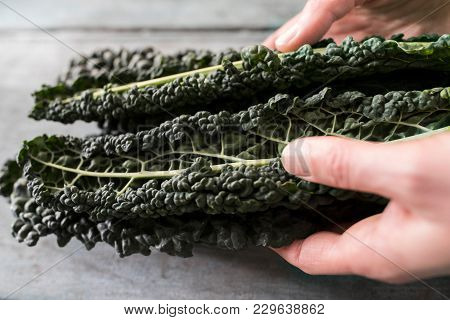 Close Up Of Woman Holding Cavolo Nero Leaves