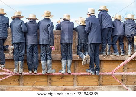 Amish Watching Horse Auction