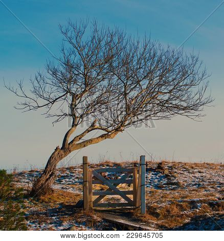 Lonely Gates To Field Under Curved Tree