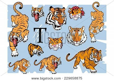 Tiger Set, Isolated On White Background, Colour Illustration, Suitable As Logo Or Team Mascot. Benga