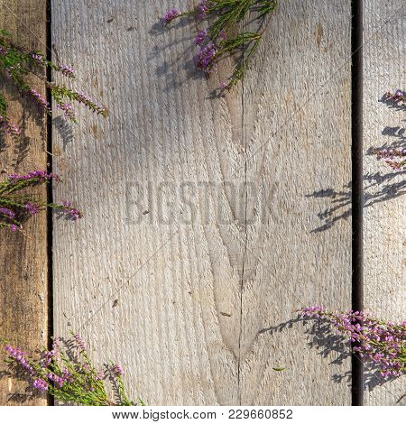Heap Of Pink Heather Flower Calluna Vulgaris, Erica, Ling On Rustic Table, Desk. Greeting Card For M