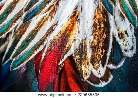 Bright Brown Feathers  Of Some Bird