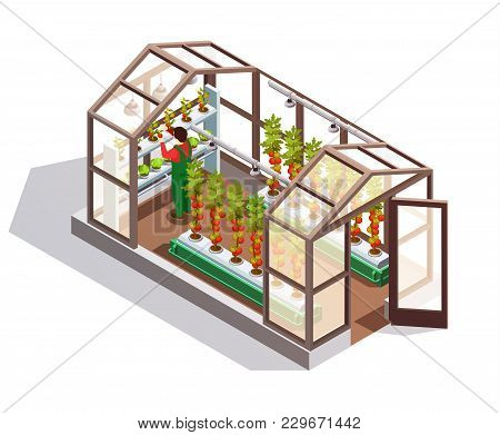 Isometric Greenhouse For Growing Vegetables And Fruits With Glass Walls Shelves And Artificial Light