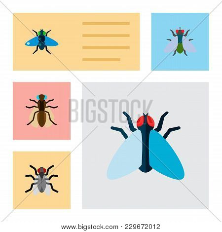 Icon Flat Buzz Set Of Mosquito, Bluebottle, Buzz And Other  Objects. Also Includes Fly, Gnat, Hum El