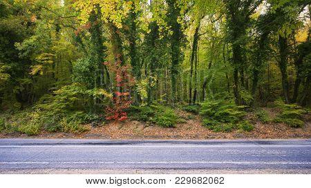 Asphalt Road And Autumn Forest. Travel Composition