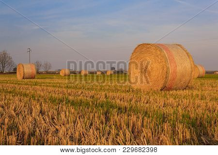 Close-up Of A Hay Cylindrical Bale In A Farmland  /expanse Of Hay Cylindrical Bales In A Farmland At