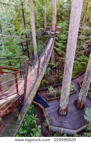 A Top View Of A Suspended Pendant Bridge In A Subtropical Forest With Tall Green Trees And Fern Bush