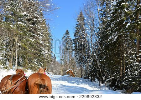 Walking On A Frosty Winter Sunny Day In Sleigh With Horse Harness. Snow-covered Road In The Winter F