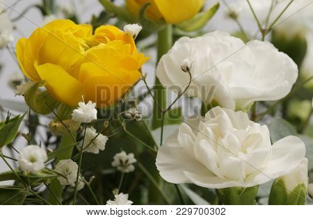 Flower bouquet background. Carnations and Anemones.