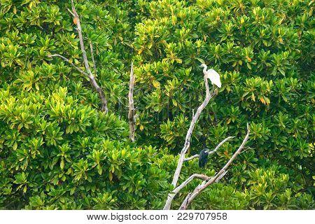 Western Reef Heron Or Egretta Gularis And Little Egret Or Egretta Garzetta